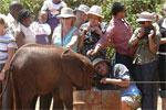 Daphne Sheldrick's Elephant Orphanage