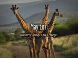 2011-May