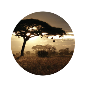Loving Africa Since 1990!