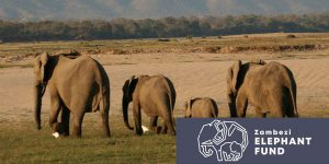 Spotlight Zambezi Elephant Fund