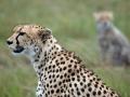 cheetahbabe
