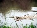 lionwater2
